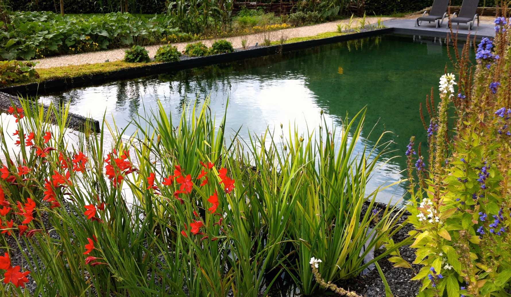 Waterkwaliteit : vijverwater testen