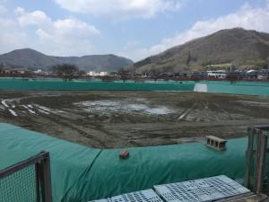 Momotaro Koi Vijvercentrum Scheper mudpond