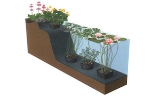 vijverplanten planten