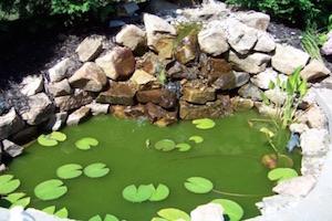 Groen vijverwater – Wat kun je eraan doen ?